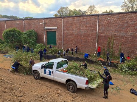 A photograph shows volunteers removing invasive species and loading the plants into a pick-up truck.