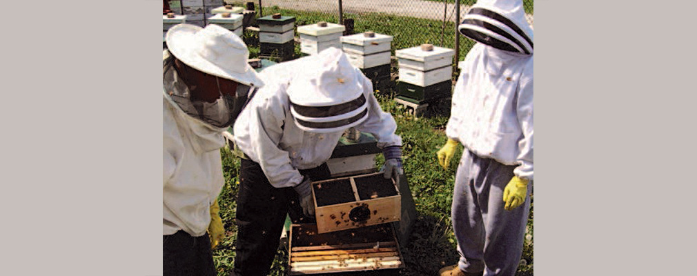 Photograph of workers in protective gear handling a beehive.