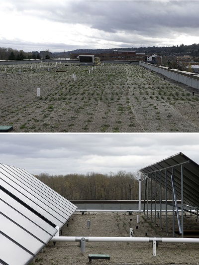 A pair of pictures of the green roof of Gray's Landing. One picture of most of the roof shows rows of vegetation sprouting on the roof. The other picture shows portions of two sets of solar panels (approximately 20 panels), with some vegetation between the panels.