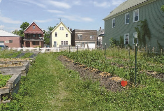 A lot in a residential neighborhood, once vacant but now an urban farm with a growing crop of vegetables.
