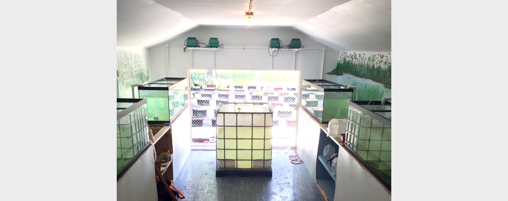 Photograph of the interior of the aquaponics center, with five glass cases filled with a liquid and, in the background, six rows of containerized planters outside the structure.