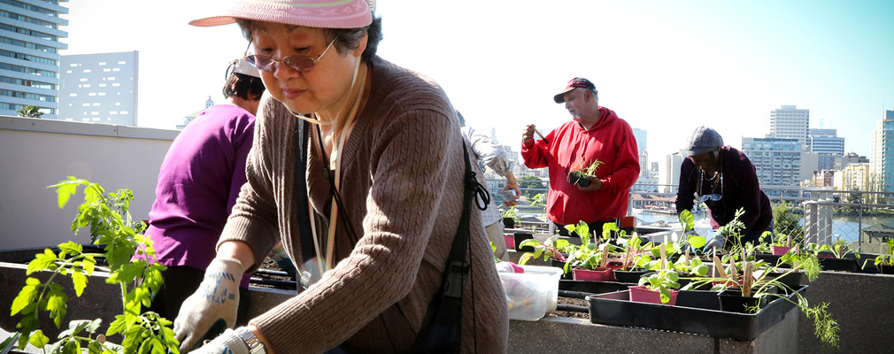 Photograph of four residents and volunteers planting seedlings in the raised beds of a rooftop community garden.