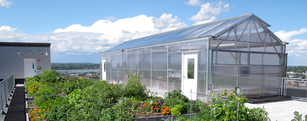 Photograph of nine rooftop garden beds and a greenhouse.