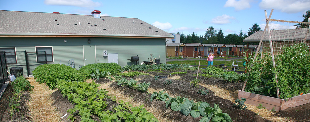 Photograph of several rows of vegetables in a garden behind a one-story building.